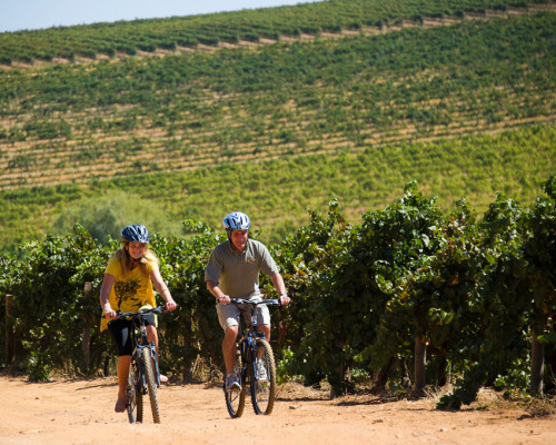 remarkable_africa_southafrica_wineries_cycling