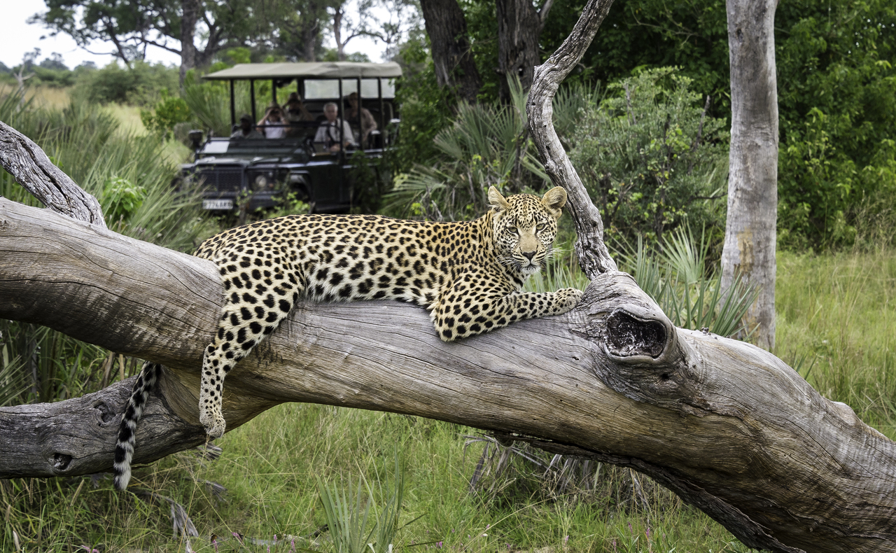 Thinking of going on safari…let us give you some advice